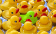 CHOPS - ducks